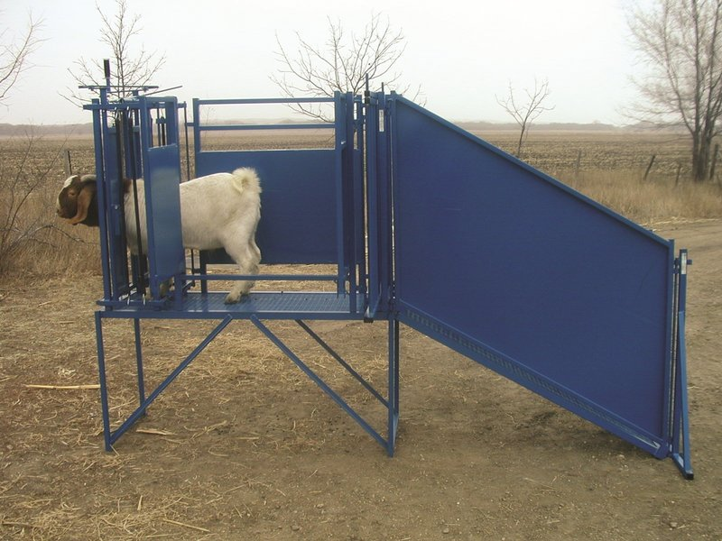 how to build a sheep loading ramp